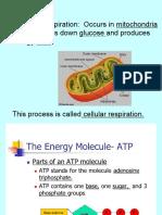 cellularrespiration