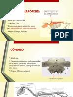 Practica 1 Generalidades y Esqueleto Axial 3