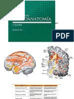 Resum Neuroanatomia