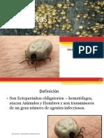 12. Familia Ixodidae y Argasidae