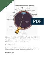 Anatomi Mata atau Bagian.docx