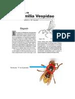 Taxo Hymenoptera