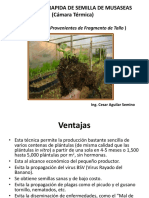 253637330-Camara-Termica-para-hijuelos-de-platano.pdf
