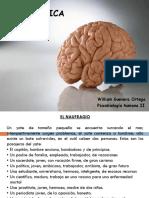 Neuro Eti Car