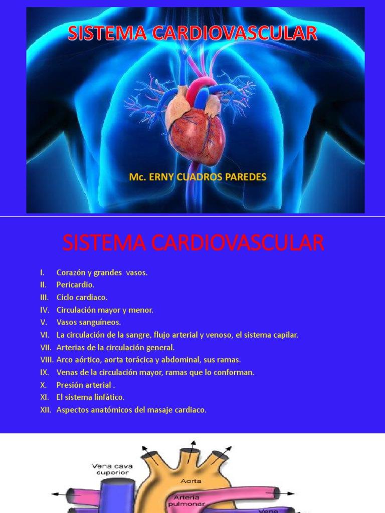 Anatomía del corazón hipertensión arterial pulmonar