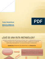 Rutas metabólicas