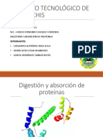 Digestión y Absorción de Aminoácidos. Equipo 6.