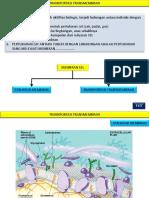 TRANSPOR-TRANSMEMBRAN.pdf