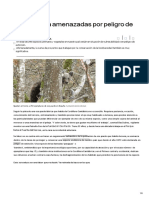 Flora y Fauna Amenazadas Por Peligro de Extinción