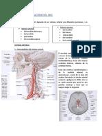 An T13. Vascularización Arterial Del SNC