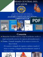 1 Sistema Cardiovascular corregido.ppt
