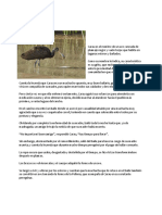 Las Aves en La Cultura Guaraní