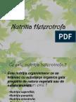 147054043-Nutritia-Heterotrofa.pptx
