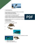 Prueba Invertebrados y Vertebrados 2