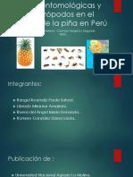 Plagas Entomológicas y Otros Artrópodos en El Cultivo