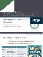 presentacionupecmindaebrucellaspp-130401094033-phpapp02