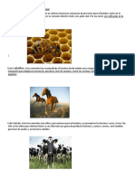 ANIMALES  UTILES AL HOMBR12.docx