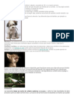 Comunicacion Lenguaje Animal