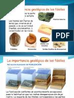 1.3. Los Fosiles en Geologia