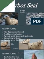 copy of harbor seal  1