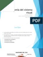 Anatomía Del Sistema Visual 1