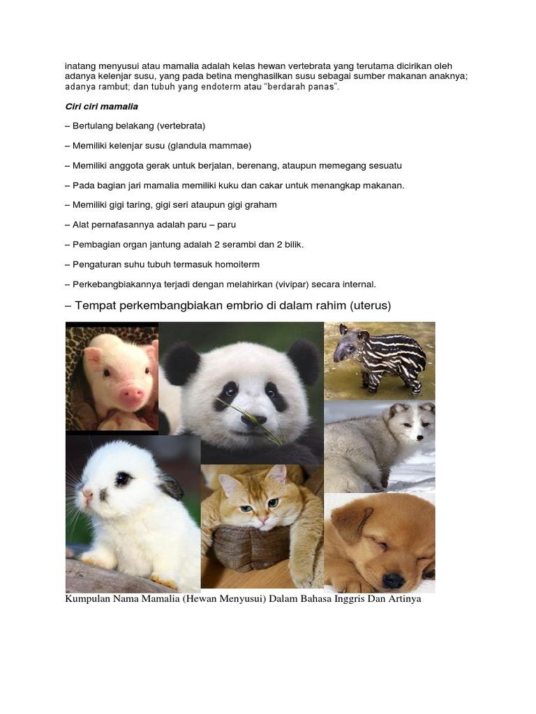 Ciri Ciri Panda Dalam Bahasa Inggris Dan Artinya - Ini Cirinya