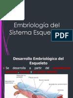 Esqueleto Embriología