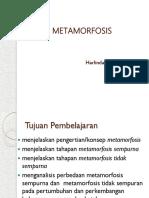 13.-Pertemuan-13-Metamorfosis.ppt