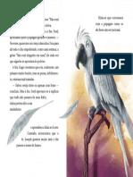 Recurso_a Viuva e o Papagaio