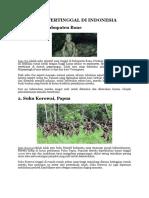 10 Suku Primitif Di Indonesia Ini Terancam Punah
