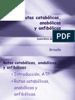 Rutas Catabolicas, Anabolicas y Anfibolicas