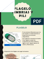 flagelo-fimbrias-y-pili.pptx