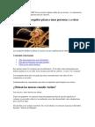 ¿Por Qué Los Mosquitos Pican a Unas Personas y a Otras No