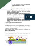 La Estructura y Funcion de La Membrana Plasmatica