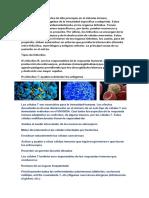 Los Linfocitos Son Células de Alta Jerarquía en El Sistema Inmune