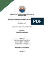 Drescripcion Morfologica de La Yuca
