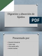Digestion y Absorcion de Lipidos-1[1]