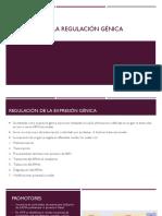 elementos de la regulación génica