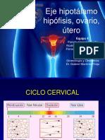 Ciclo cervical.pdf
