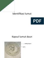 Identifikasi lumut.pptx