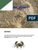 Paleontologi2015-13.pptx