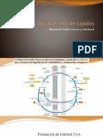 Anabolismo de Lípidos-N