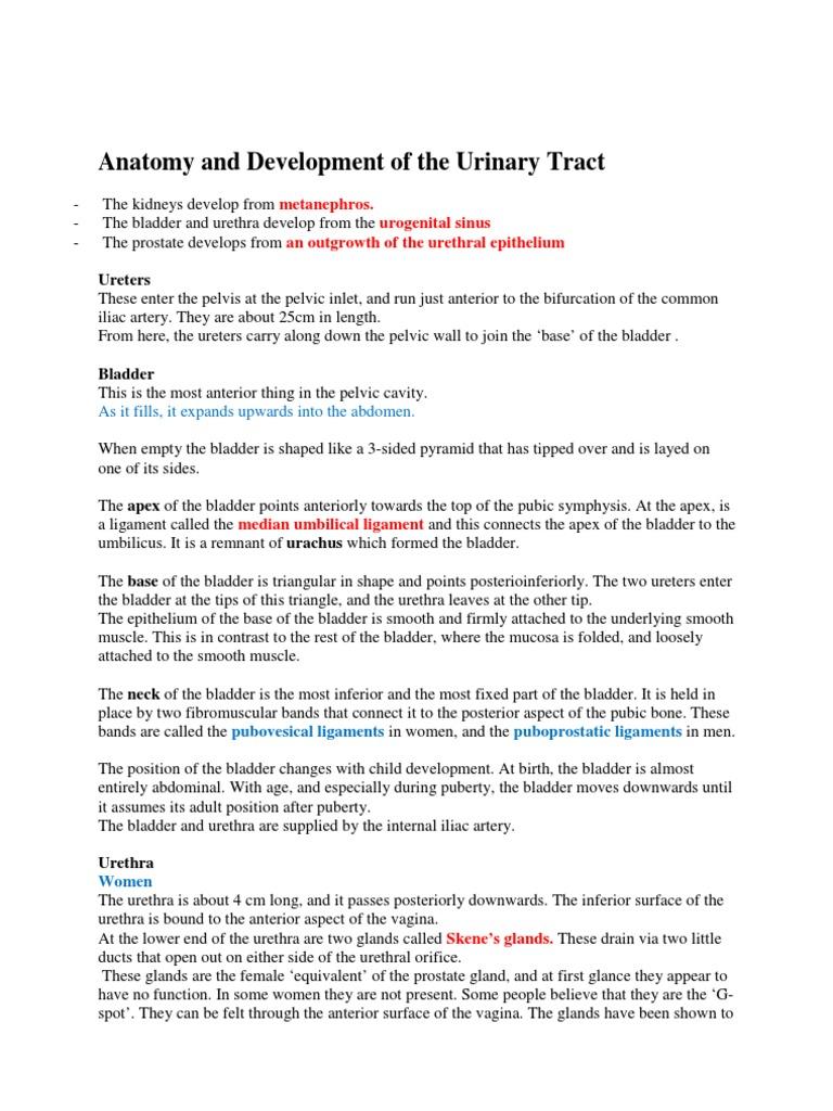 Anatomy and Development of the Urinary Tract | Urinary Bladder ...
