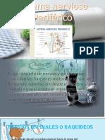 Sistema Nervioso Periférico 12