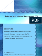 External and Internal Anatomy of FISH