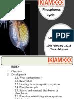 Phophorus Cycle