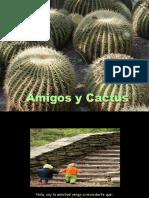 Amigos _ Cactus