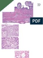 Laminas Digestorio II