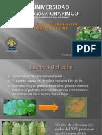 Manejo Agroecológico de La Roya Del Café