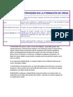 FACTORES QUE INTERVIENEN EN LA FORMACIÓN DE ORINA.docx